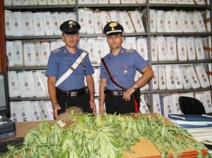 Marijuana sequestrata a Borgia