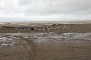 Cani abbandonati in spiaggia