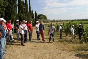Associazione 'I Vignaioli del Cirò' (2)