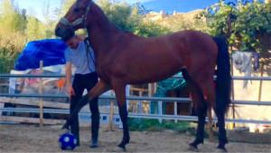 deleo-cavalli2