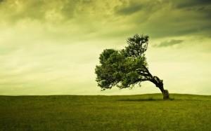 vento-albero