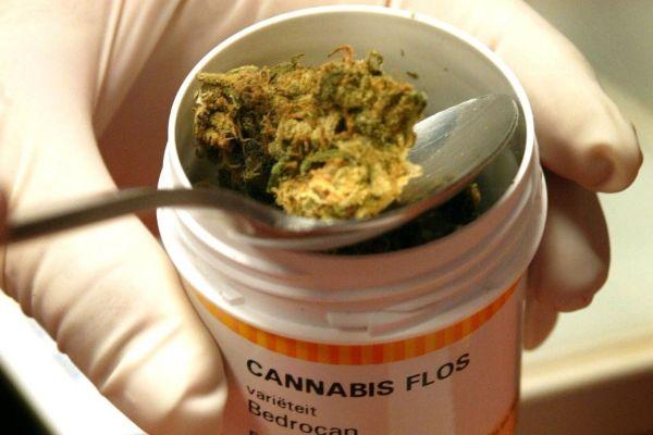 La prima cannabis terapeutica sarà venduta nel Vicentino