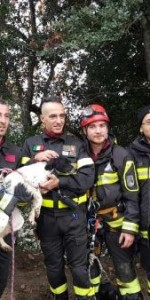 I Vigili del Fuoco salvano un cucciolo caduto in un dirupo di oltre 100 metri