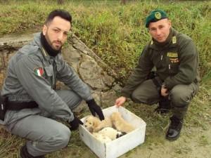 Le Guardie Zoofile Crotone salvano 4 cuccioli, trovati sul ciglio della strada1