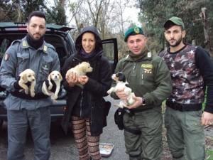 Le Guardie Zoofile Crotone salvano 4 cuccioli, trovati sul ciglio della strada2