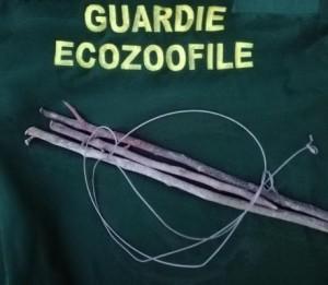 Guardie Ecozoofile- sequestrati lacci e trappole per la cattura della fauna selvatica