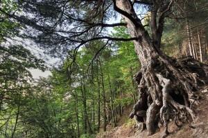 Il Fondo nazionale stanzia 20 milioni per combattere lo spopolamento delle nostre montagne