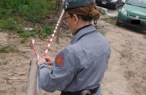 Sequestrato un bosco a Savelli- tagliati illecitamente pini, denunciato il responsabile
