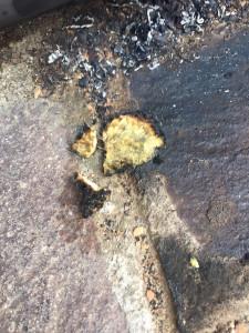 Belvedere Spinello- ragazzino brucia nido d'ape, individuato dai Carabinieri3