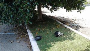 Città Pulita- il randagismo un problema serio a Cirò Marina6
