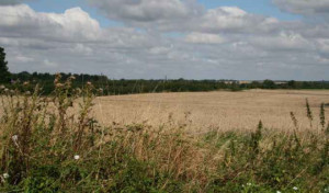 L'accesso dei giovani calabresi al settore primario e contrastare l'abbandono dei suoli agricoli