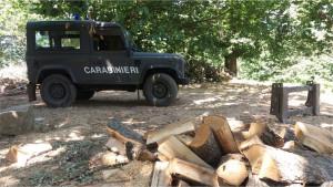 Abbattuti circa 250 alberi di Pino, denunciati dai Carabinieri Forestalie due responsabili