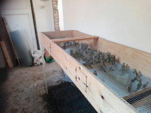Sequestrati 570 uccelli protetti detenuti in 11 gabbie, una persona denunciata