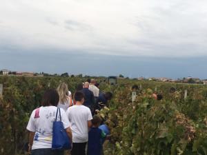 """Marrelli Wines grande successo per la prima partecipazione a """"Cantine Aperte in Vendemmia"""" (1)"""