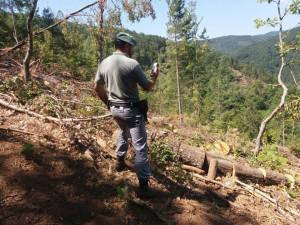 Taglia illegalmente 14 alberi per consegnarli ad una ditta boschiva, scoperto e denunciato