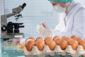 Uova contaminate da Fipronil riscontrate dal servizio veterinario dell'Asp di Lamezia Terme