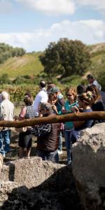 """""""La Festa della Vendemmia"""" tra profumi di uve e filari di viti della Cantina Librandi di Cirò Marina (1)"""
