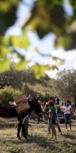 """""""La Festa della Vendemmia"""" tra profumi di uve e filari di viti della Cantina Librandi di Cirò Marina (10)"""