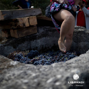 """""""La Festa della Vendemmia"""" tra profumi di uve e filari di viti della Cantina Librandi di Cirò Marina (11)"""