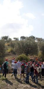 """""""La Festa della Vendemmia"""" tra profumi di uve e filari di viti della Cantina Librandi di Cirò Marina (14)"""