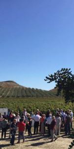 """""""La Festa della Vendemmia"""" tra profumi di uve e filari di viti della Cantina Librandi di Cirò Marina (4)"""