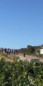 """""""La Festa della Vendemmia"""" tra profumi di uve e filari di viti della Cantina Librandi di Cirò Marina (5)"""