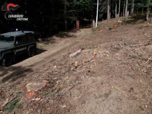 Abbatte illegalmente 62 alberi, denunciato un pensionato di Mesoraca (2)