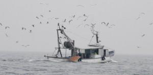 #FaiAscolto, La segreteria della FAI Cisl Calabria avvierà confronti sul territorio con i lavoratori del settore Pesca