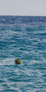 4 Novembre, Cirò Marina celebra la giornata dell'unità nazionale e delle forze armate (68)