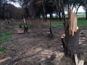 Tre uomini sorpresi a tagliare alberi nella pineta di Suvereto a Isola Capo Rizzuto, Arrestati (1)