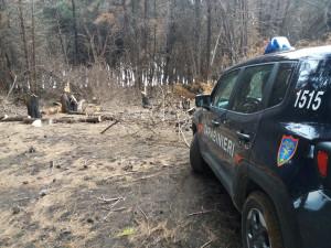 Tre uomini sorpresi a tagliare alberi nella pineta di Suvereto a Isola Capo Rizzuto, Arrestati (2)