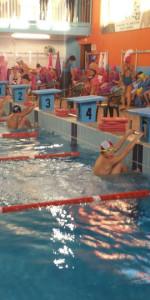 Centinaia di nuotatori di tutte l'età della Scuola Neysis di Cirò Marina per la gara di fine anno (93)