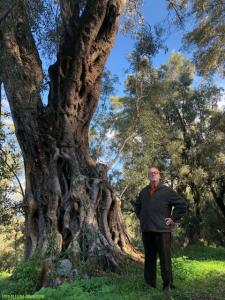 Gli ulivi ciclopici della provincia di Reggio Calabria, domenica 17 dicembre su canale 5 a