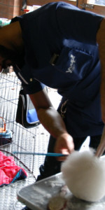 Grande successo per la VI Esposizione nazionale Canina a Cirò Marina (12)