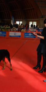 Grande successo per la VI Esposizione nazionale Canina a Cirò Marina (15)