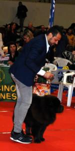 Grande successo per la VI Esposizione nazionale Canina a Cirò Marina (25)