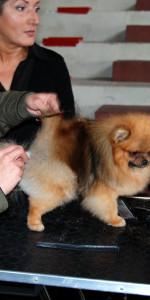 Grande successo per la VI Esposizione nazionale Canina a Cirò Marina (26)