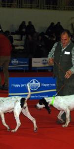 Grande successo per la VI Esposizione nazionale Canina a Cirò Marina (28)
