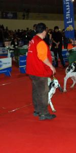 Grande successo per la VI Esposizione nazionale Canina a Cirò Marina (29)