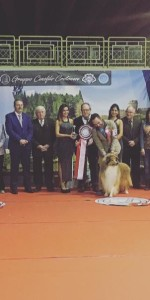 Grande successo per la VI Esposizione nazionale Canina a Cirò Marina (3)