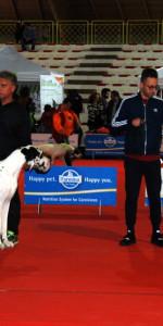 Grande successo per la VI Esposizione nazionale Canina a Cirò Marina (35)