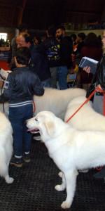 Grande successo per la VI Esposizione nazionale Canina a Cirò Marina (36)