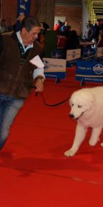 Grande successo per la VI Esposizione nazionale Canina a Cirò Marina (38)