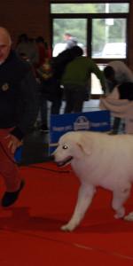 Grande successo per la VI Esposizione nazionale Canina a Cirò Marina (39)