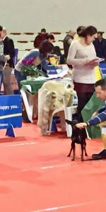 Grande successo per la VI Esposizione nazionale Canina a Cirò Marina (4)