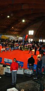 Grande successo per la VI Esposizione nazionale Canina a Cirò Marina (41)