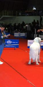 Grande successo per la VI Esposizione nazionale Canina a Cirò Marina (42)