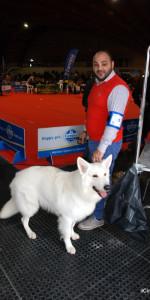 Grande successo per la VI Esposizione nazionale Canina a Cirò Marina (44)