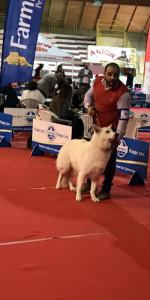 Grande successo per la VI Esposizione nazionale Canina a Cirò Marina (7)