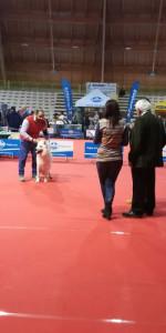 Grande successo per la VI Esposizione nazionale Canina a Cirò Marina (8)